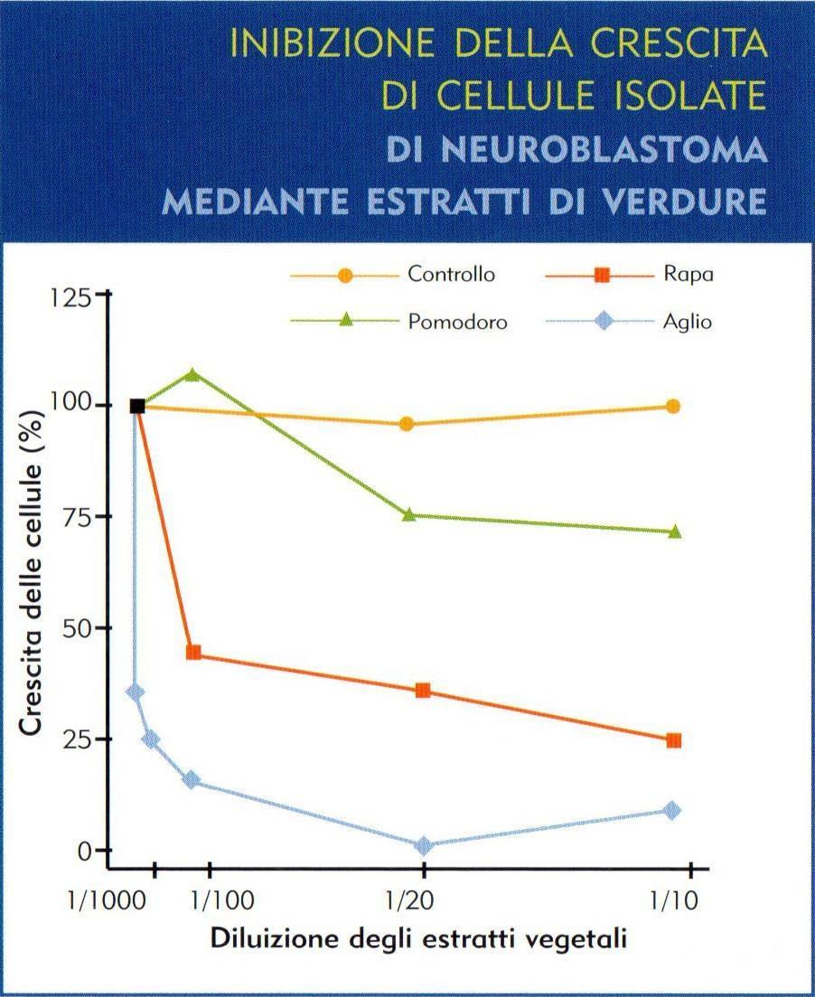 Alimentazione contro il tumore aglio cipolla porro for Aglio porro